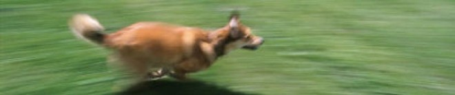 cropped-dog-running-0001.jpg