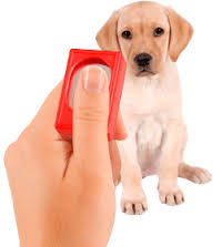 clicking dog